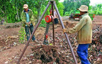 Lâm Đồng thành công trong tăng năng suất từ cây cà phê già cỗi