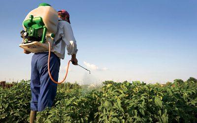 Sẽ chấm dứt tình trạng hỗn loạn thị trường thuốc bảo vệ thực vật?